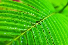 Water droplets on green leaf Royalty Free Stock Photography