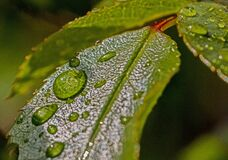 Water Droplets on Green Leaf Stock Photography