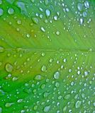 Water droplets on green leaf royalty free stock photo