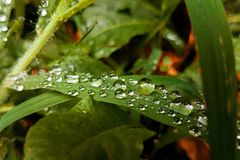 Water droplets on a green leaf stock photography