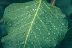 Water droplets on the green leaf Stock Photo