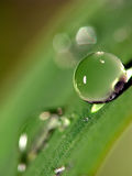 Water droplets on leaf Stock Photography