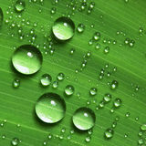 Water droplets on leaf. Details of water droplets on a green leaf Royalty Free Stock Photo