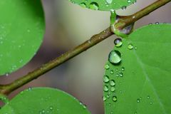 Water droplets on a leaf Royalty Free Stock Images