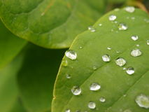Water droplets on leaf. Photograph of water droplets on a green plant leaf Stock Photos