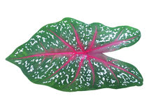 Water droplets on leaf. Water droplets on green leaf royalty free stock photo