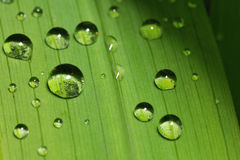 Water droplets on a leaf Royalty Free Stock Photography