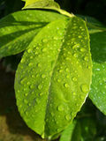 Water droplets on leaf Stock Photo