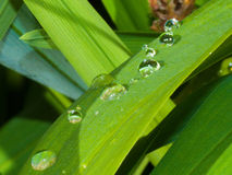 Water Droplets. On leaf Stock Image