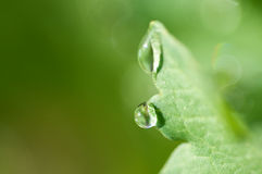 Water Droplets on Leaf. Close up of a water dews on a leaf stock image