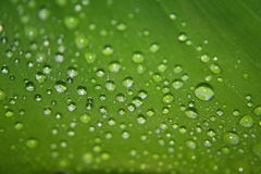 Water Droplets on a Leaf Royalty Free Stock Photos
