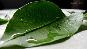 Water droplets on leaf Royalty Free Stock Images