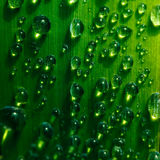 Water droplets on a leaf Stock Images