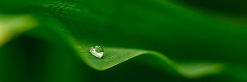Water droplets on a leaf Stock Photos