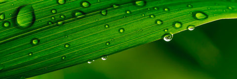 Water droplets on a leaf Stock Image