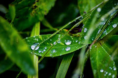 Water droplets on a leaf Stock Photography
