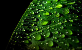 Water droplets on a leaf. Royalty Free Stock Photo