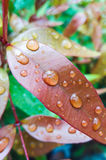 Water droplets on the leave Stock Image