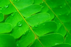 Water droplets on leaves Stock Photo