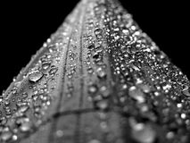 Water Droplets Macro Photograply Royalty Free Stock Image