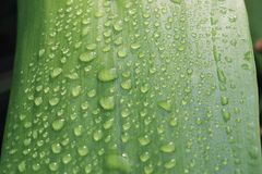 Water droplets natural. Go green love earth save earth save tree water droplets care feeling hearts quotes quote macro detail close up romance royalty free stock images