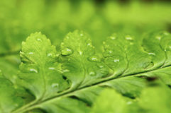 Free Water Droplets On Leaf Stock Photos - 20338473