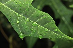 Free Water Droplets On Leaf Reflection Close Up Stock Photography - 139071942