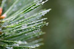 Water droplets on plant Stock Photos