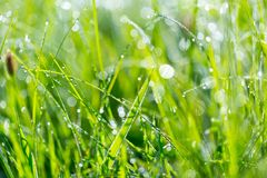 Water droplets on plant Royalty Free Stock Photos