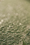 Water droplets settled on green background. Water drops featured as condensation Royalty Free Stock Images