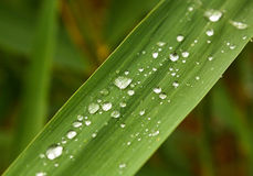 Water droplets Stock Photography