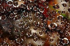 Water droplets in spider web Stock Image
