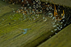 Water droplets on spider web.  Stock Image