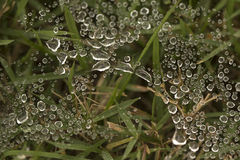 Water Droplets on Spider Web Royalty Free Stock Photo