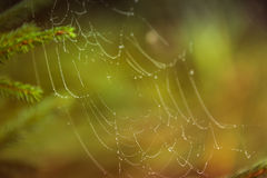 Water droplets on a spider web in nature Royalty Free Stock Photos