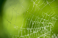 Water droplets on a spider web Royalty Free Stock Photos