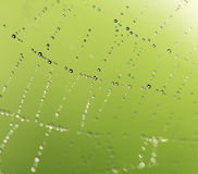 Water droplets on a spider web in nature Royalty Free Stock Images