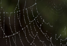 Water droplets on a spiders web stock images