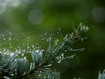 Water droplets suspended in spider web after rain shower stock images