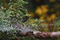 Water Droplets Trapped in a Spider Web. Water from a recent rain trapped in a spider web, creating a garland of shimmering droplets Royalty Free Stock Image