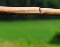 Water droplets from wood daytime. With CPL Royalty Free Stock Images