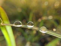 Water droppe på gräs arkivfoton