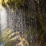 Water dropping out of moss in black forest, Germany Royalty Free Stock Photography