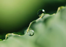 Water drops. The dewdrops on the green plant Royalty Free Stock Photo