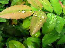 Water drops. Beautiful spring and fresh water drops after rain on the green leaves stock photo