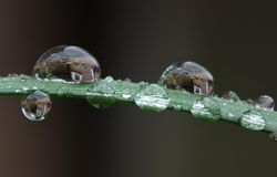 Water drops Royalty Free Stock Images