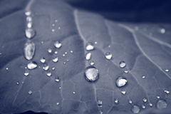 Water drops. Shine on cabbage sheet Royalty Free Stock Photos