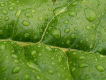 Water drops. On green leaf Stock Photos