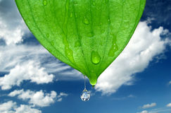 Water drops. Fresh water drops on green leaves Stock Photo