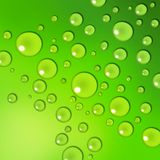 Water drops. On a green background stock illustration